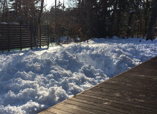 snow(1/19).jpg