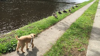 Liue and ducks 1.jpg