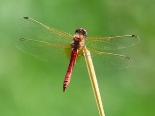 dragonfly-177338_1920.jpg
