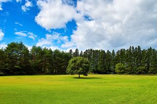 grassland+woodland.jpg