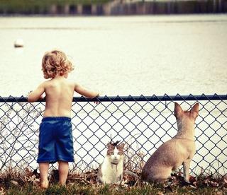 kid-cat-dog.jpg