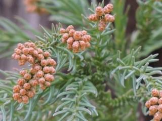 pollen2.jpg